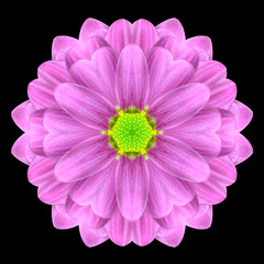 Pink Mandala Flower Kaleidoscope Isolated on Black