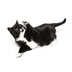 Katze greif nach etwas