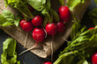 Постер, плакат: Organic Raw Red Radishes
