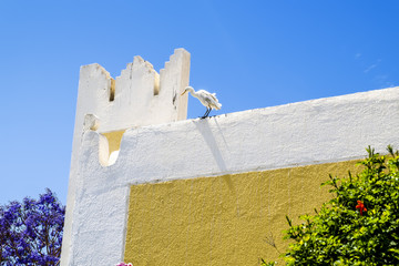 Egret standing on the wall of the House