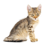 Kitten on a white background - 65040853