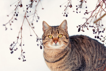 Portrait of cat with tree branches in background