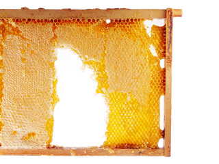 honeycomb in wooden frame