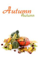 Mini pumpkins,leaves,chestnut and corn