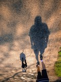 Companionship. A man and dog walking. Image flipped vertically poster