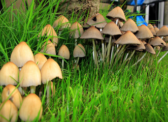 row of toadstools