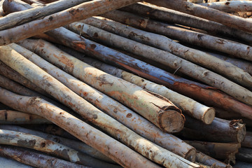Pile of old wood sticks