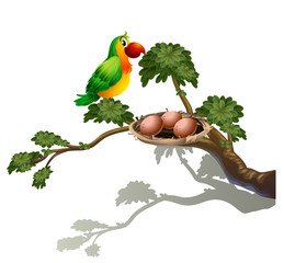 A parrot and a nest