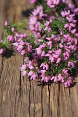 Heideblüten auf altem Holzbrett