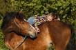 Jugendliche kommuniziert mit Pferd