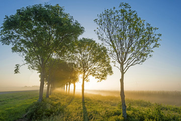 Trees along a field in spring at dawn