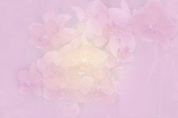 Orchid soft color and blur style for background.