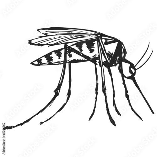 mosquito - 65066460