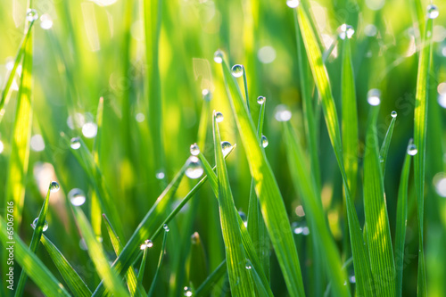 green grass on a lawn with dew drops