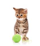 Cute kitten - 65071662