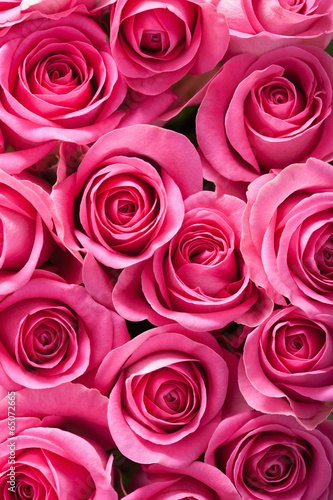 canvas print picture beautiful pink roses background