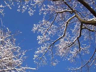 Traumhafte Schneeäste am blauen Himmel