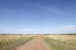 Постер, плакат: Dirt road and the stretching savannah grassland of Masai Mara