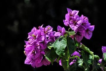 South flower