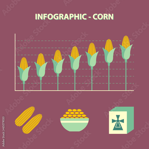 infographic with graph of increase corn and icons in flat design