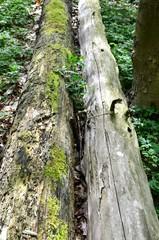 Baumstämme am Waldboden
