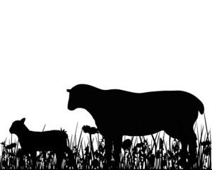 Schaf und Lamm auf Weide