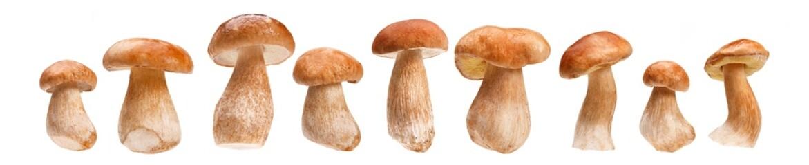 Fresh ceps, porcini mushrooms