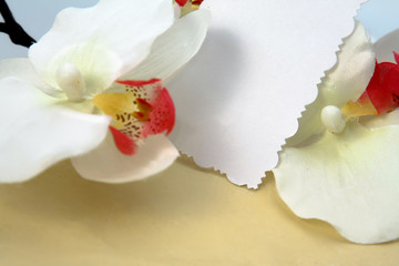 Orchid , isolated on white background.
