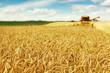 Leinwanddruck Bild - Wheat harvest