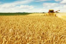 "Постер, картина, фотообои ""Wheat harvest"""