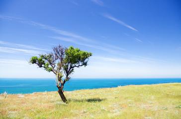 Tree on seacoast