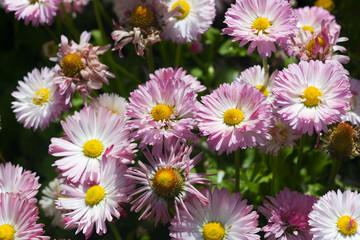flower for background