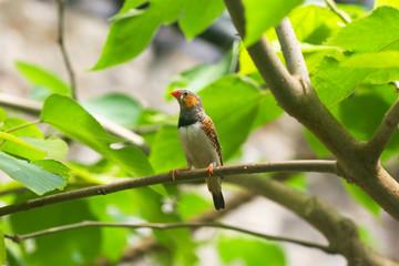 bird with orange beak on a tree branch