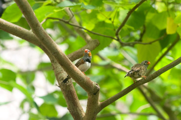 two small tropical bird on a branch