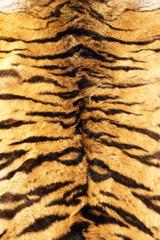stripes on tiger pelt