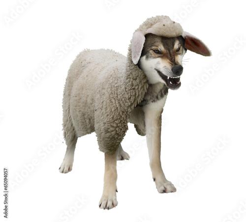 Fotobehang Schapen Wolf im Schafspelz