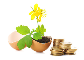 Coins and plant in eggshell isolated on white