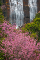 Cherry Blossom and waterfall