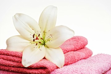 Pink towel and white lily flower, isolated on white background.
