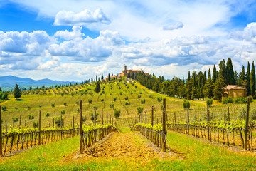 Tuscany, vineyard, cypress trees and village. Rural landscape, I