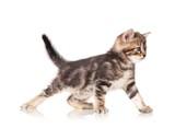 Cute kitten - 65101065