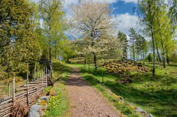Springtime in Sweden - a sunny day in the countryside of Smaland