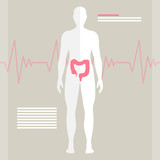 Vector Illustration of the Human Bowel poster