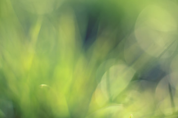 Beautiful green bokeh abstract background