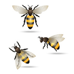 Bees icons set
