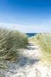 Leinwanddruck Bild - Dune with beach grass close-up.