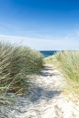 Dune with beach grass close-up.