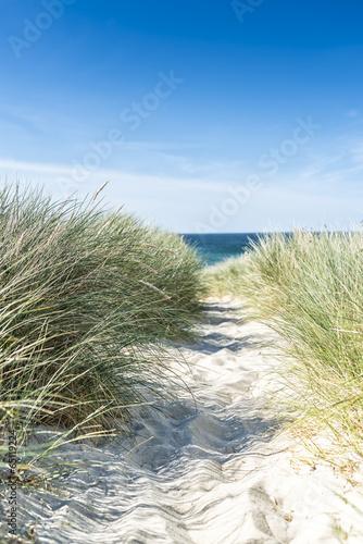 Leinwanddruck Bild Dune with beach grass close-up.