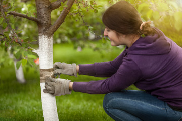 young woman tying band on tree bark to prevent insects
