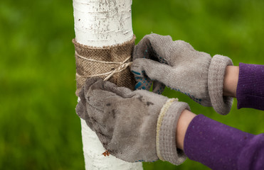 photo of hands in gloves tying healing band around tree